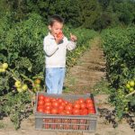 David et les tomates